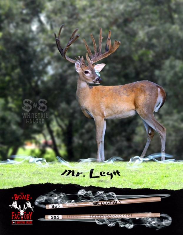 13-MR LEGIT